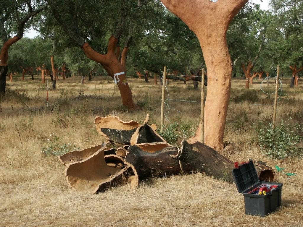 Пробковое дерево широко используется в качестве утеплителя.
